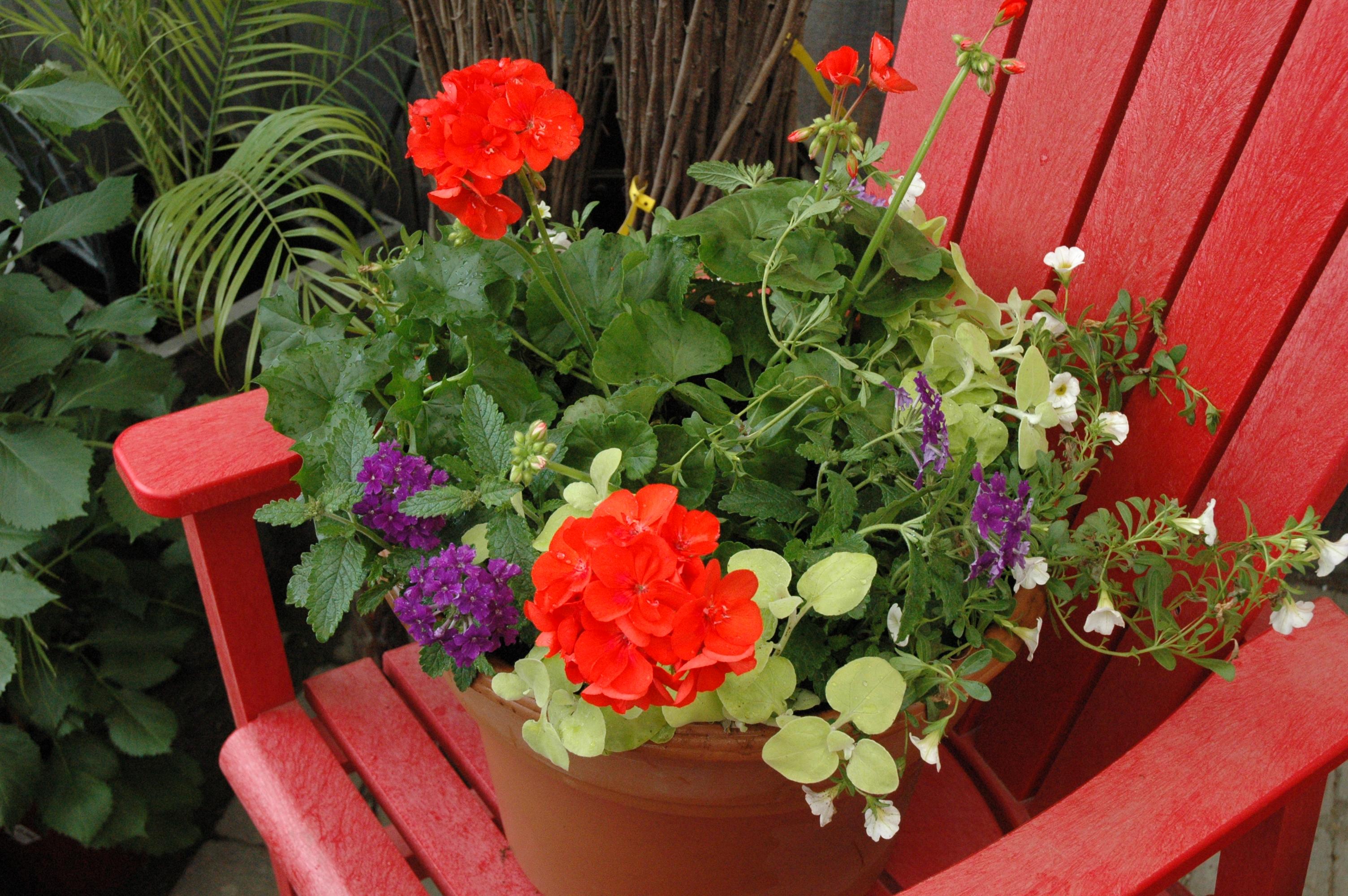 Annuelles centre de jardin boutique cadeau p pini re for Arranger sa terrasse