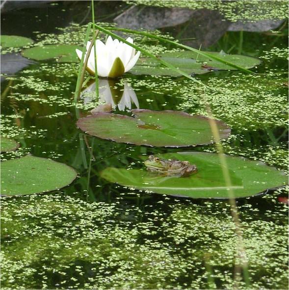 Sur la terrasse ou au jardin un jardin d eau en pot pour for Azote pour jardin