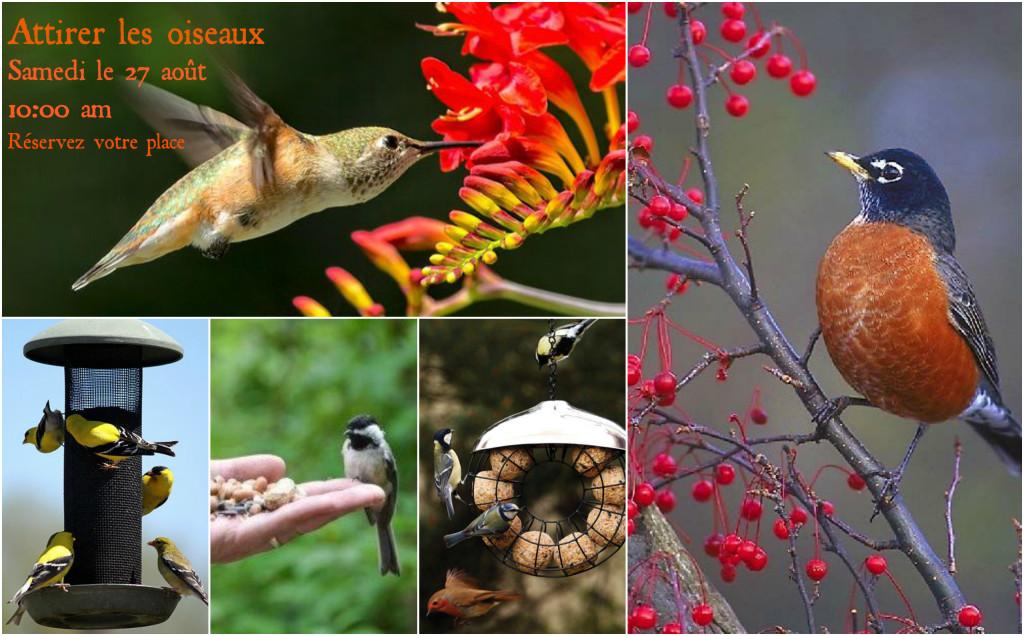 montage oiseaux
